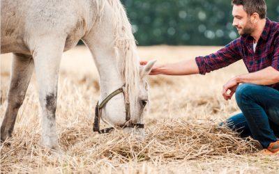 Pferde als Spiegel unserer Seele