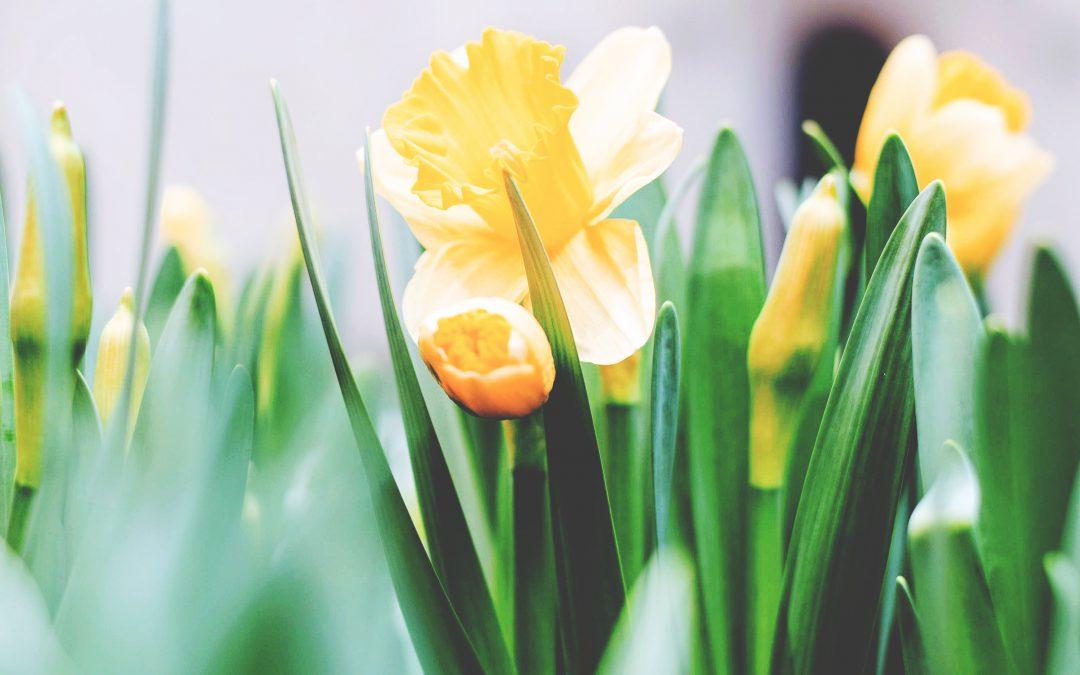 Frühling lässt sein blaues Band …